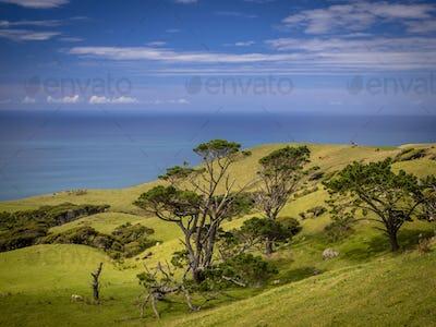 New Zealand landscape green hills and sea