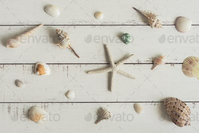 various shell on white wooden background