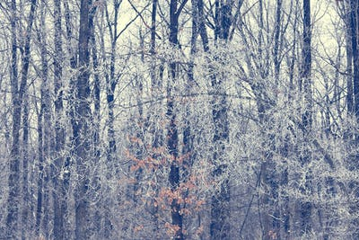 Winter trees background