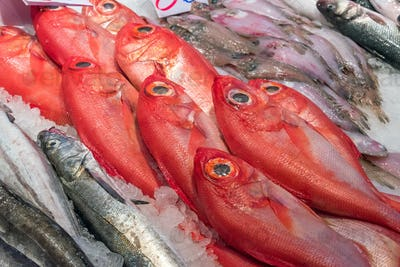 Red bream for sale at a market