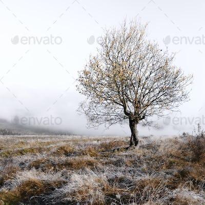 Alone autumn tree