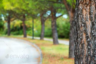 Park tree and defocused blur background