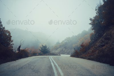 Road in autumn forest with fog, nature landscape