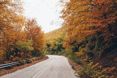 Road in autumn forest, nature landscape
