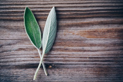 Fresh raw sage leaves on wooden table.