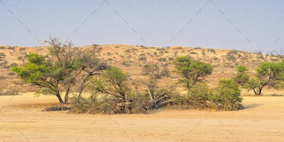 Auob River Valley in the Kalahari