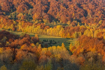 Vibrant colors of autumn in wilderness of Carpathia Mountains,Bi