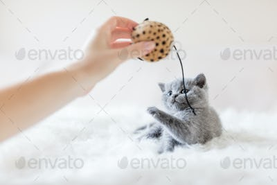 Little cat trying to poke a toy with a paw.