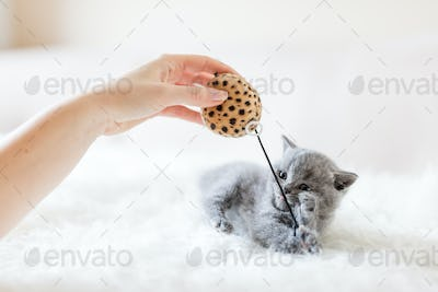 Kitten playing with a toy.