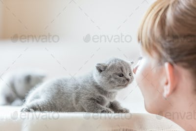 Cute little cat and woman rubbing noses.