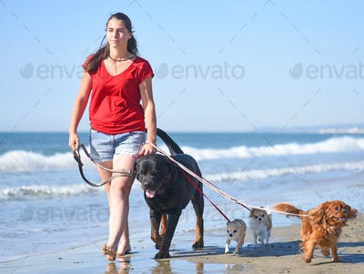woman and dogs on the beach