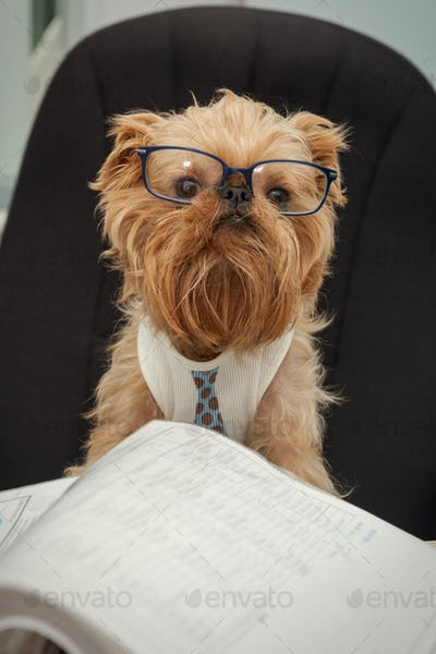 Dog - in office