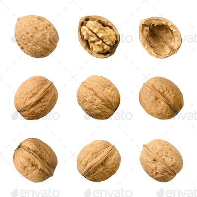 Walnuts, whole and opened, isolated on white background