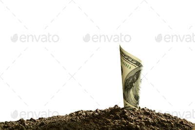 Rolled bank note on top of soil