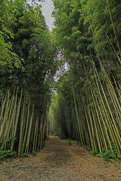 Bath Through a Bamboo Forest