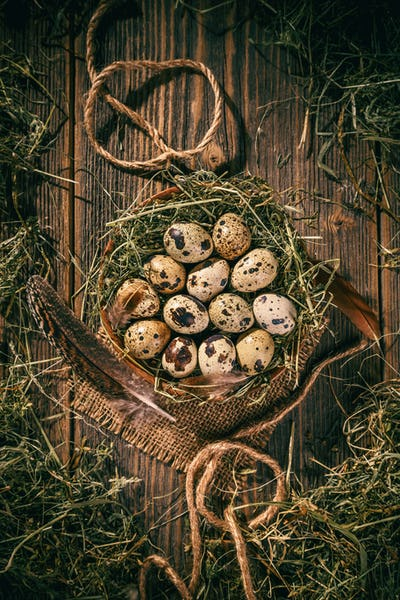 Quail eggs in a hay nest