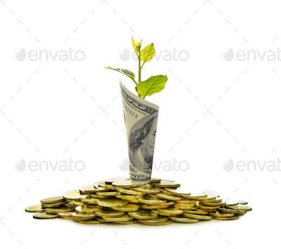 Pile of coins and rolled bank note with plant on top