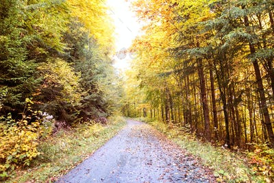 Road through the autumn forest.