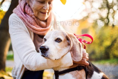 An elderly woman with dog in autumn nature.