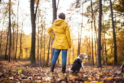 Senior woman with dog on a walk in an autumn forest.