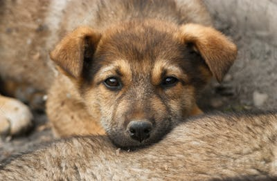 Homeless, sad puppy
