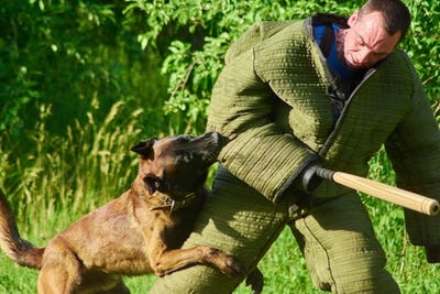 The angrily looking hound is embracing the man's leg and biting his elbow