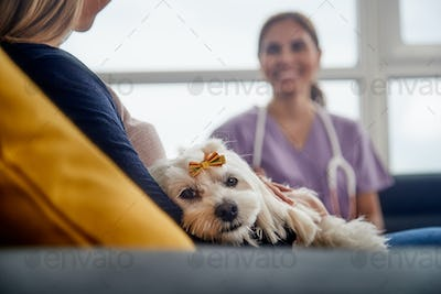 Veterinary House Call With Doctor Dog Owner And Pet