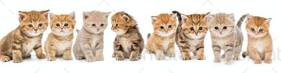 Portraits of a large group of small kittens