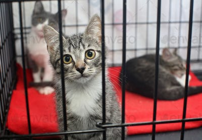 Little homeless kittens in the cage