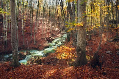 Beautiful autumn forest with river in crimean mountains at sunse