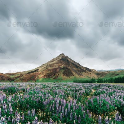 Typical Iceland landscape with mountains
