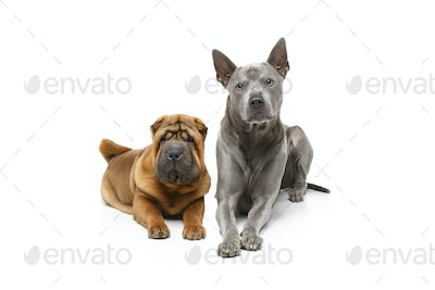 beautiful two dogs