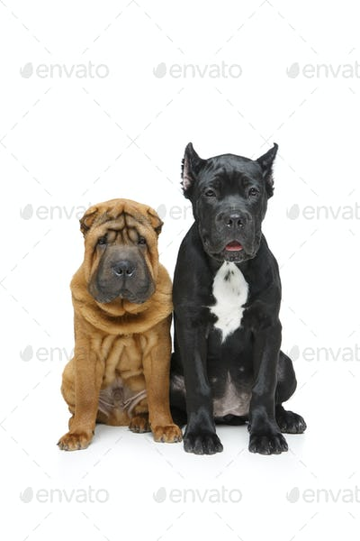 beautiful two puppy dogs