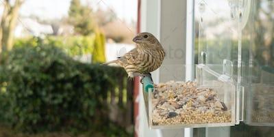 Wild Bird Lands Window Feeder Outdoor Urban Wildlife