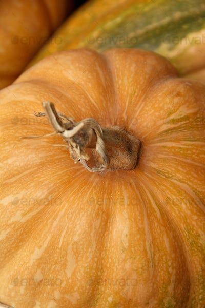 Pumpkins on a farmers market