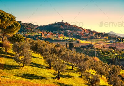 Casale Marittimo village and olive trees in Maremma. Tuscany, It