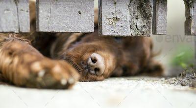 Dog shelter concept