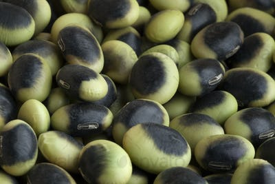 Heirloom organic Agate edamame close up