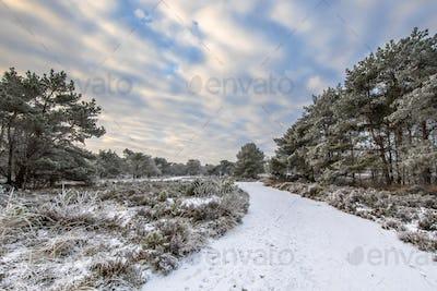 Winter forest landscape Assen Drenthe