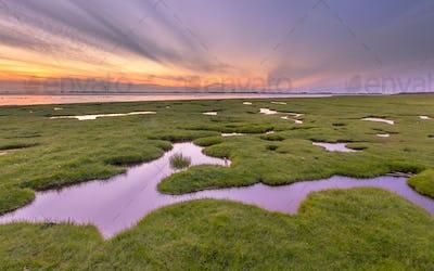 Land reclamation in mud flats on Dollard coast