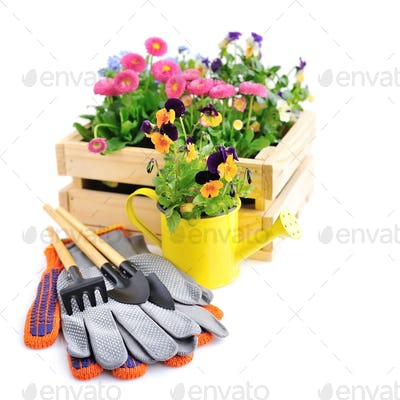 Gardening tools and spring flowers on a white background