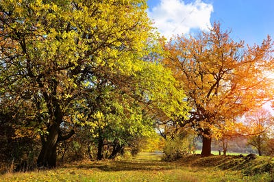 Beautiful autumn landscape with colorful trees. Sunny day