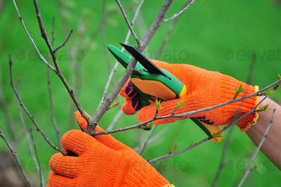 Hands with gloves of gardener doing maintenance work, pruning th