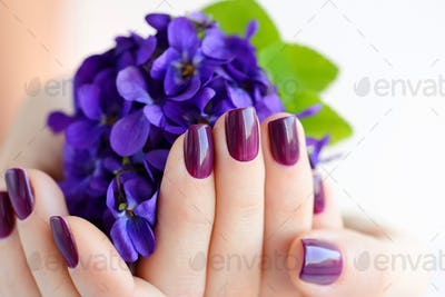 Hands of a woman with dark purple manicure on nails and bouquet