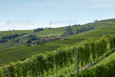 Green vineyards and hills in a sunny day, blue sky