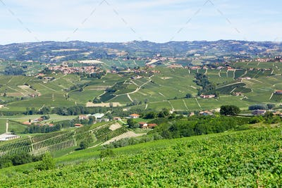 Piedmont hills with vineyards in a sunny day in Italy