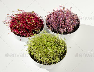 Beetroot, red cabbage, carrot microgreens in bowls from above