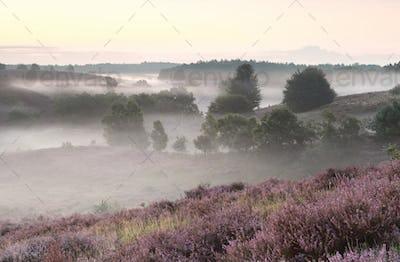 calm summer morning on pink hills