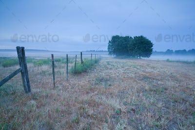 foggy morning in Belgian countryside