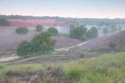 pink flowering hills in summer morning